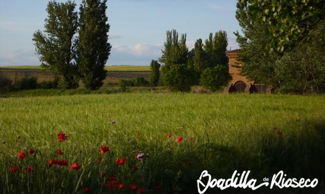 Campo de cereales y ermita