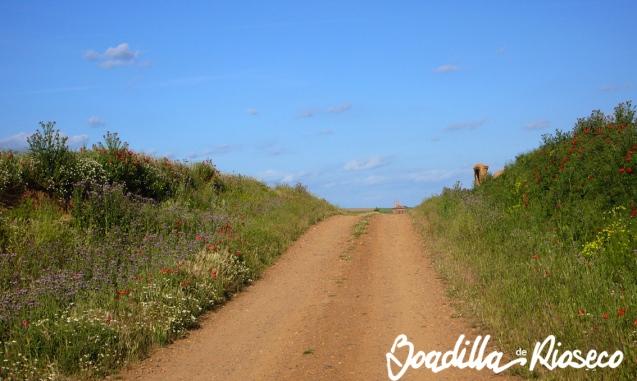 Camino a Villacarralón